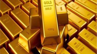 حمش مصر لمناجم الذهب
